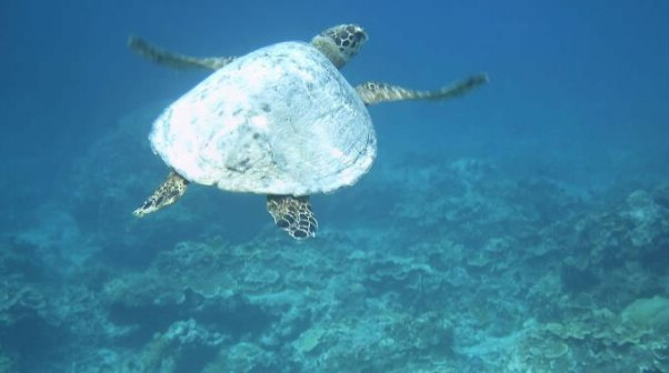Gili Islands Marine Life!